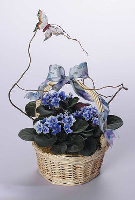 Violets In Wicker