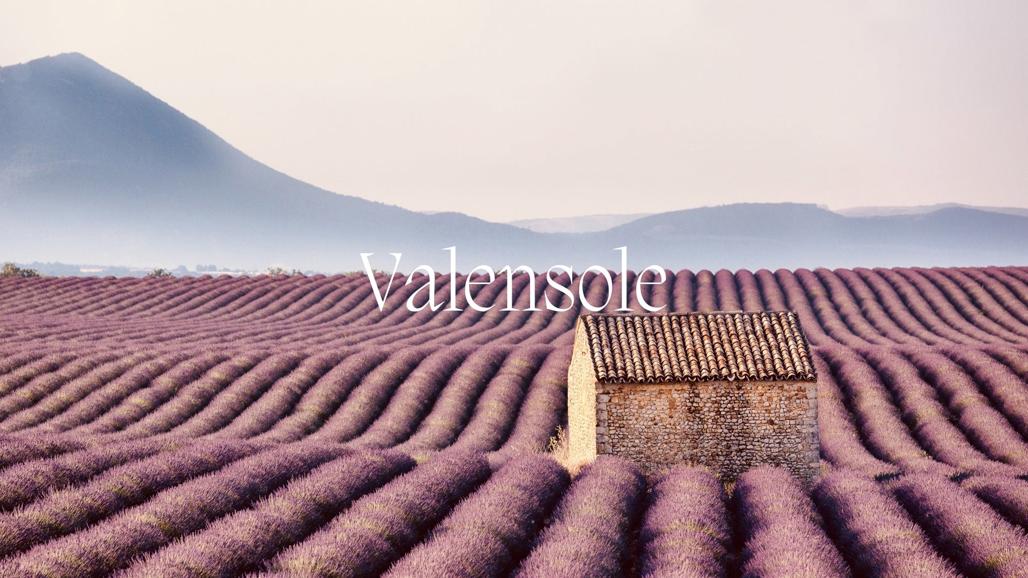Image of the lavender fields of Valensol