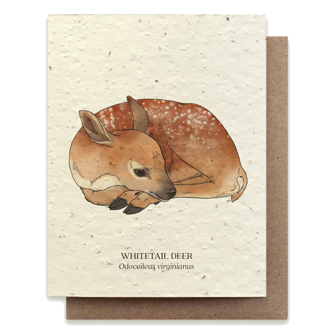 plantable greeting card