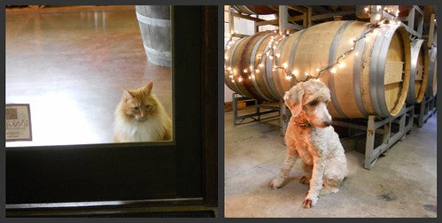 Winery Cat and Dog