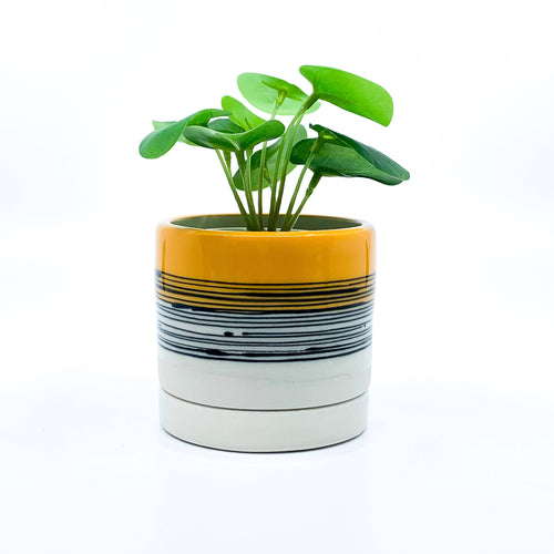 Yellow Stripe Handmade Ceramic Planter With Drainage Hole And Saucer