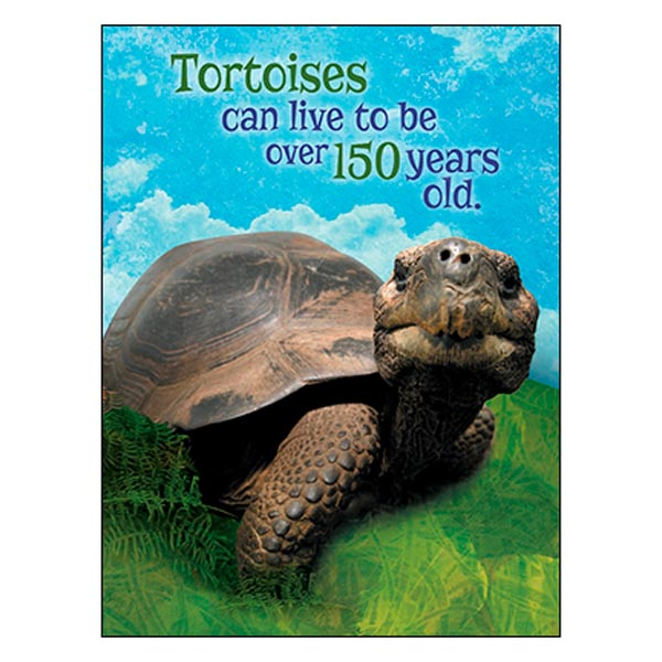 Birthday Card: You're really young in tortoise years.