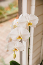 Load image into Gallery viewer, Large Double Stem Orchid