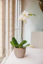 Load image into Gallery viewer, Large Single Stem Orchid