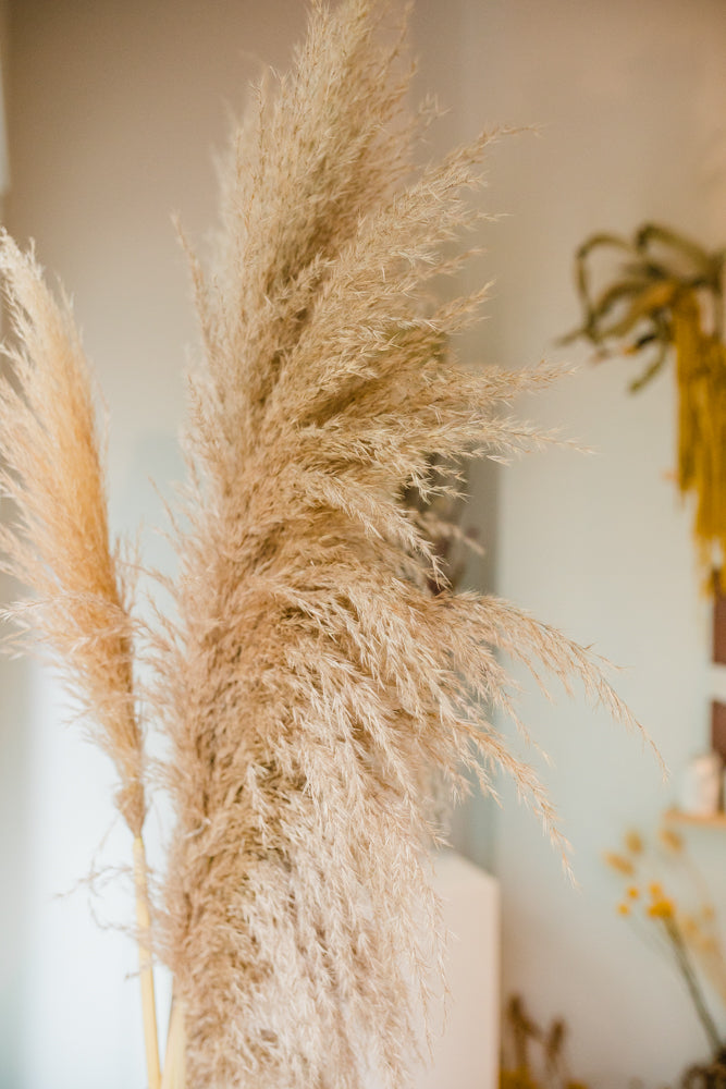 Extra Fluffy Pampas Grass