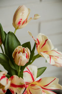 Then Came You - Blush Parrot Tulips + Amber Bottle