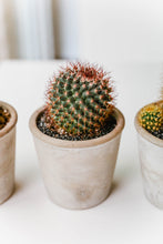 Load image into Gallery viewer, Cactus in Grey Pot