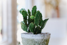 Load image into Gallery viewer, Potted Cacti