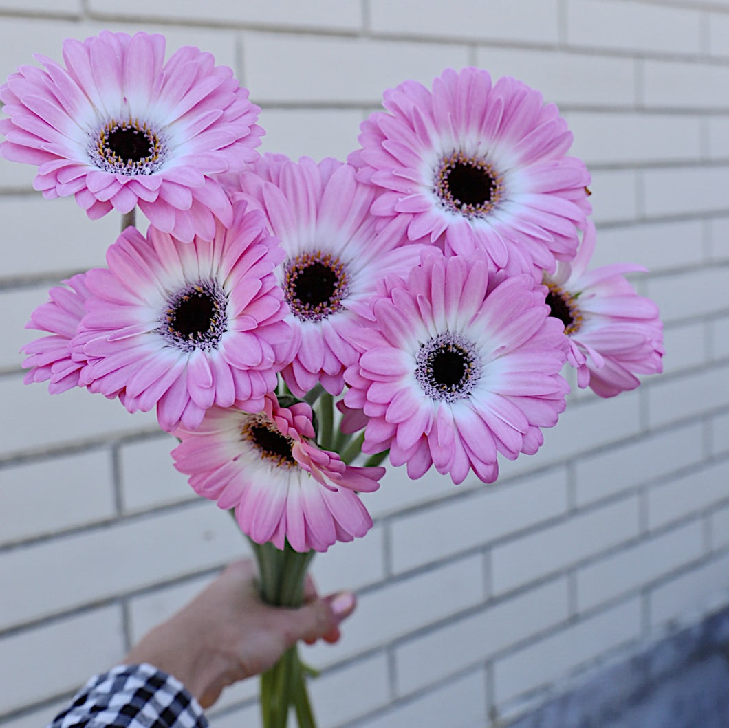 Cute Pink Germini Bunch