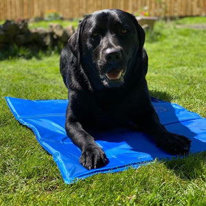 Cool Paws Cooling Pad