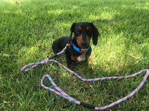 Patriotic Pup - Single and Double Leashes