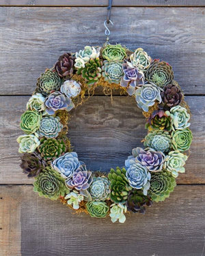 "Load image into Gallery viewer, Succulent Wreath Base 11"" Round"