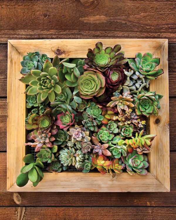 Succulent Frame 6x6 inches