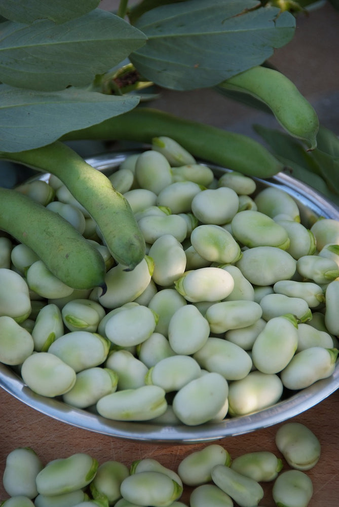 Load image into Gallery viewer, Organic Bulk Fava Beans