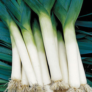 Load image into Gallery viewer, Tadorna Leek Seeds