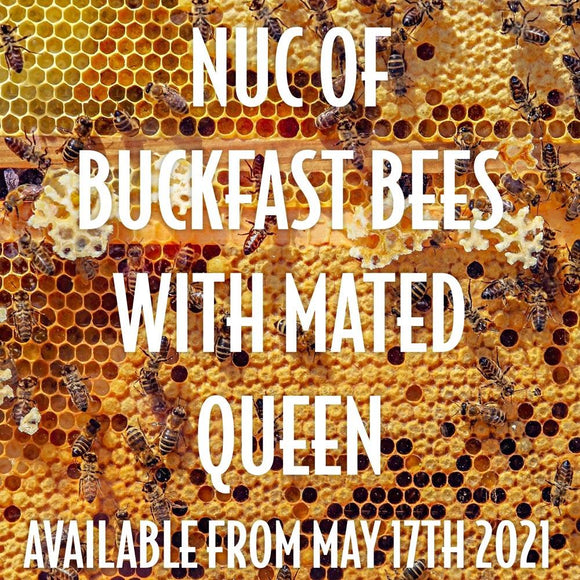Nuc of Buckfast Bees available June* 2021 [FULL PAYMENT]