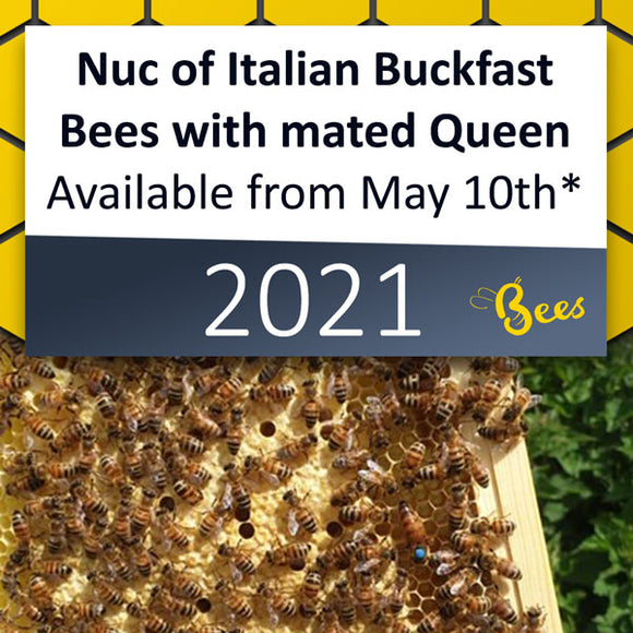 Nuc of Italian Buckfast Bees available from May 10th* 2021 [DEPOSIT ONLY]