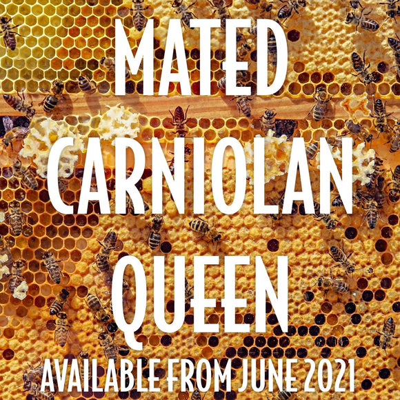 Pre-order: Carniolan Queen Bee - Ready end of April 2021