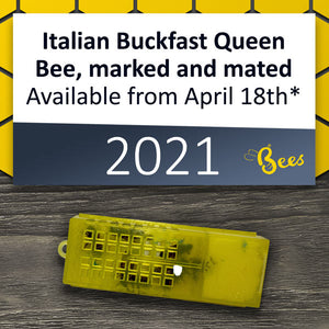 Italian Buckfast Queen, marked and mated, available from April 18th* 2021