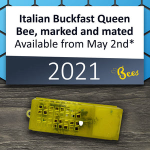Italian Buckfast Queen, marked and mated, available from May 2nd* 2021
