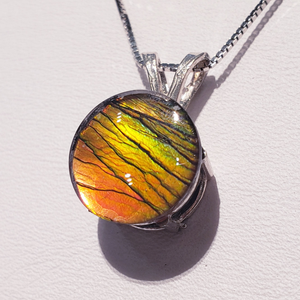 Genuine Canadian Ammolite Pendant 10mm Round  Set in SSP