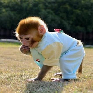 🔥Special Offer Today🔥Realistic Monkey