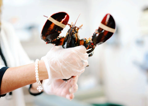 Florida Lobster - Whole