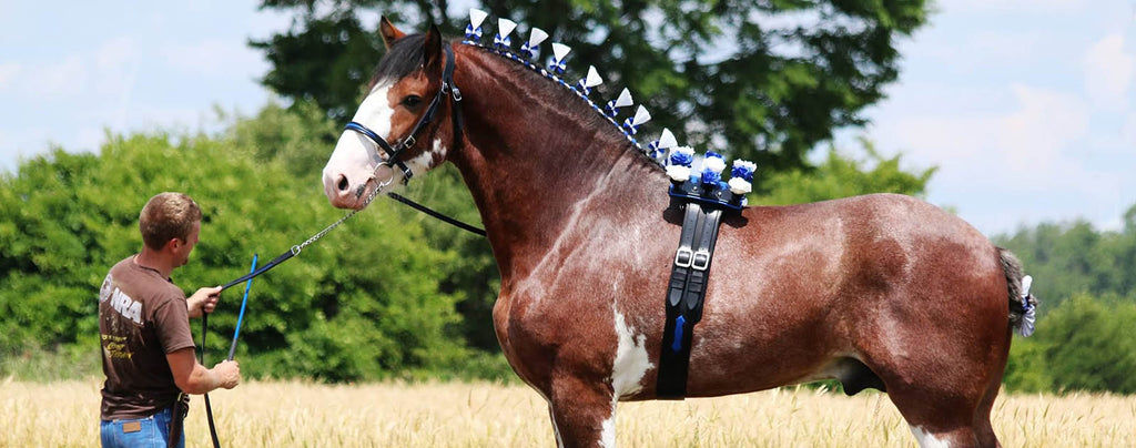 Clydesdale plus grand cheval