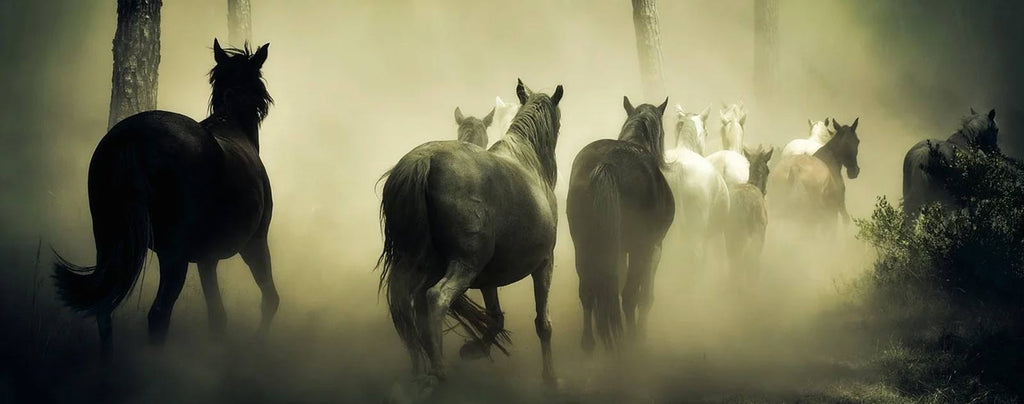 chevaux brume forêt