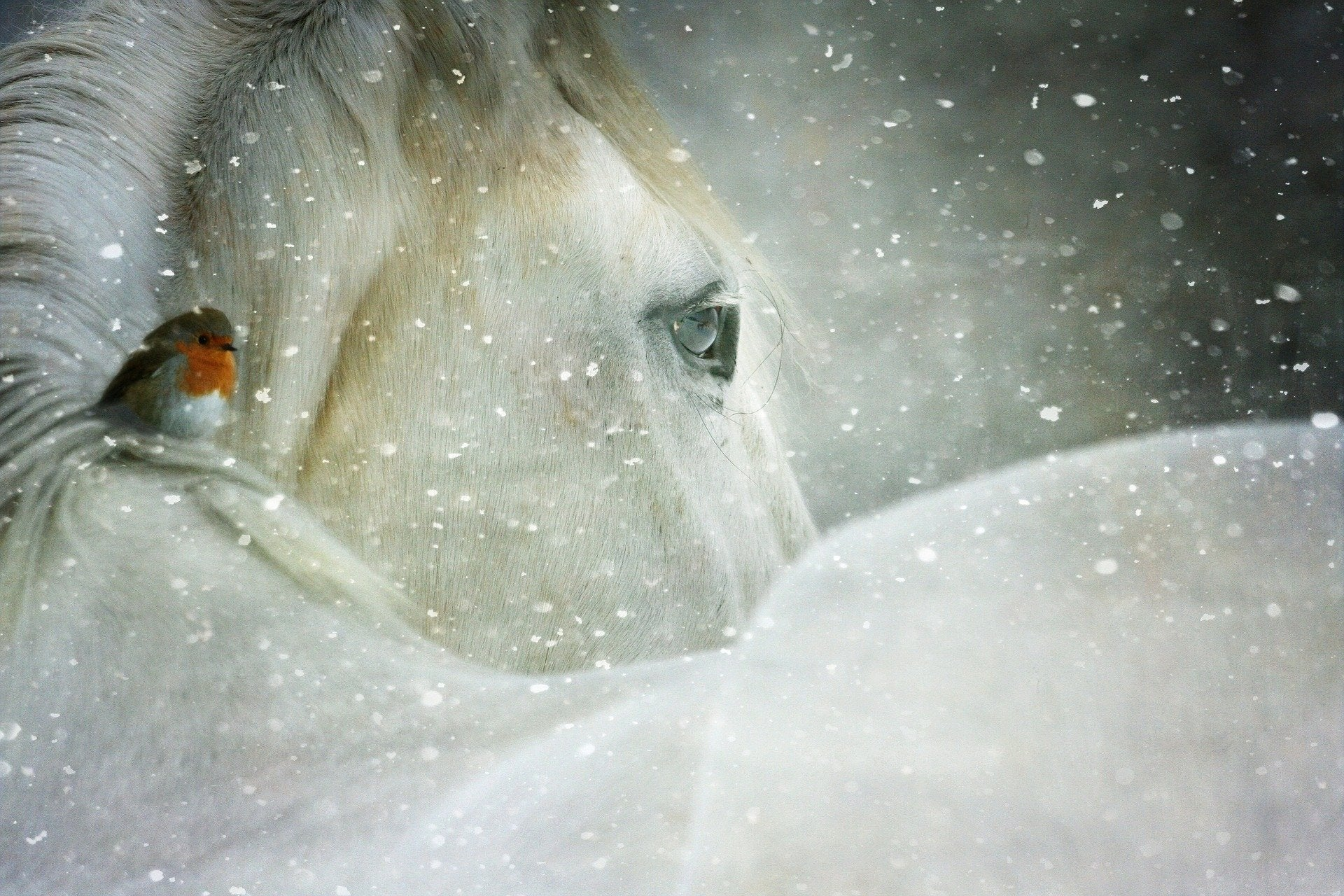 cheval neige froid