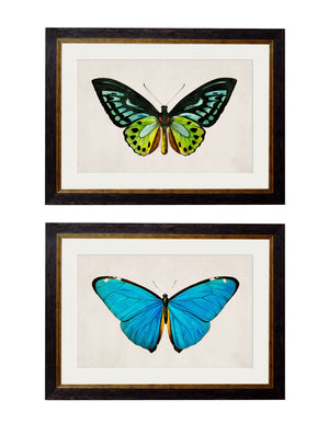 c.1836 Tropical Butterflies