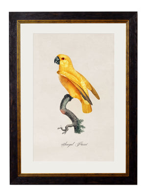C.1800's Collection of Parrots - set of 16 - The Weird & Wonderful