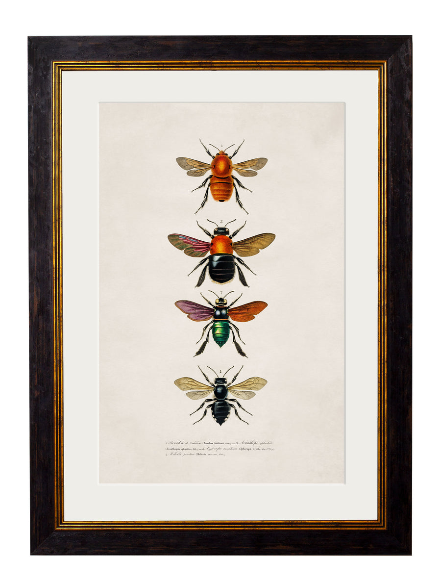 c.1892 Bees and Wasps