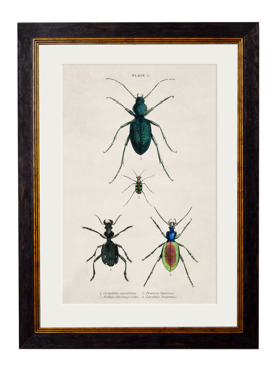 c.1836 Naturalist's Library Beetles - Plate 1 - The Weird & Wonderful