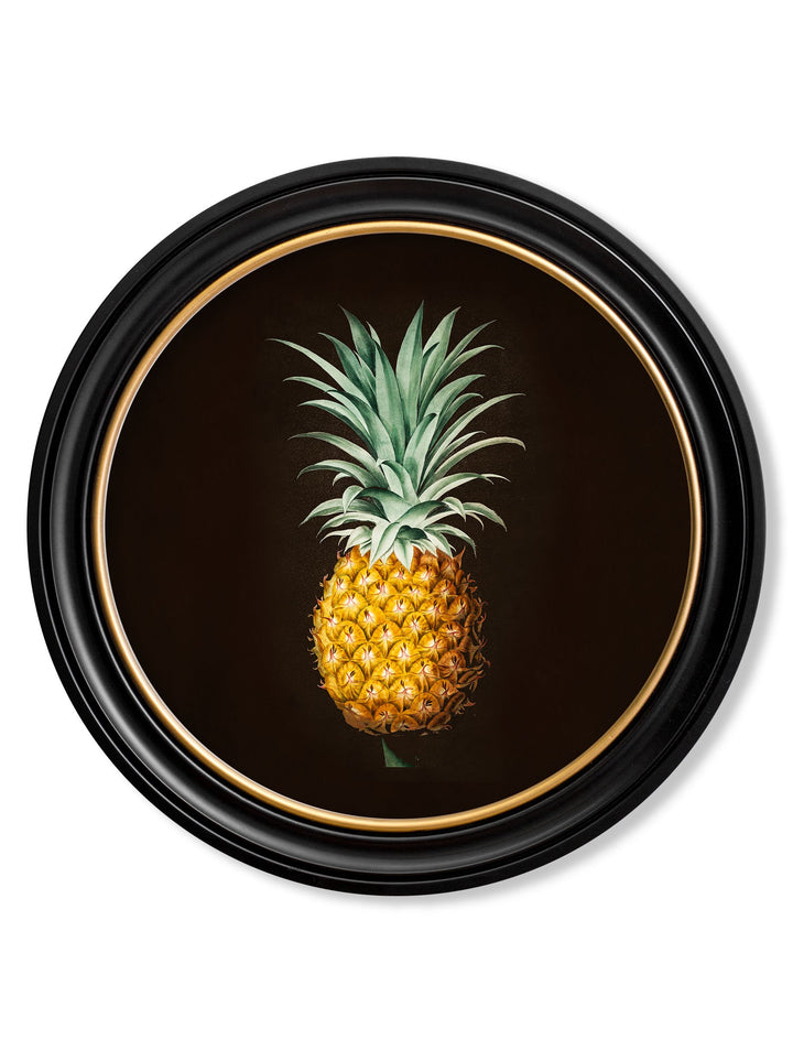 c.1812 Pineapple Study - Round Frame - The Weird & Wonderful