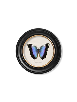 c.1835 Tropical Butterflies - Round Frames