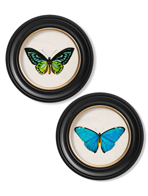 c.1836 Tropical Butterflies - Round Frames