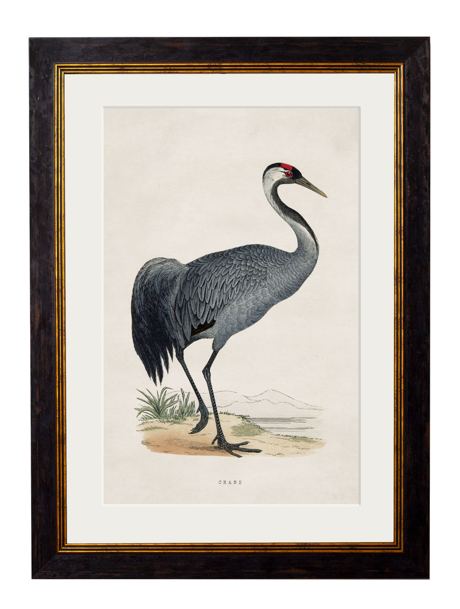 c.1850's British Wading Birds