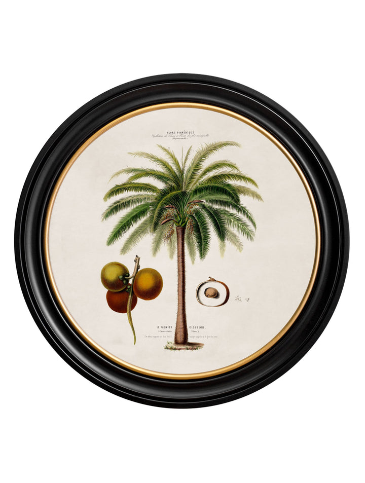 c.1843 Macaw Palm - Round Frame - The Weird & Wonderful