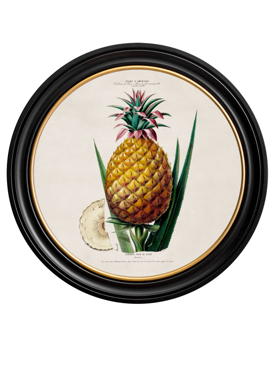 c.1843 Pineapple Plant - Round Frame - The Weird & Wonderful
