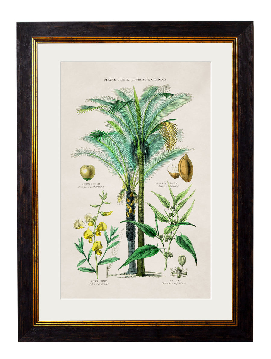 c.1877 Tropical Plants Used as Food and Clothing