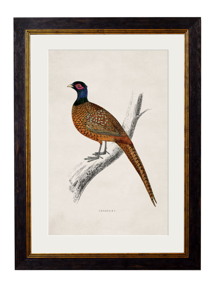 c.1850's Pheasant - The Weird & Wonderful