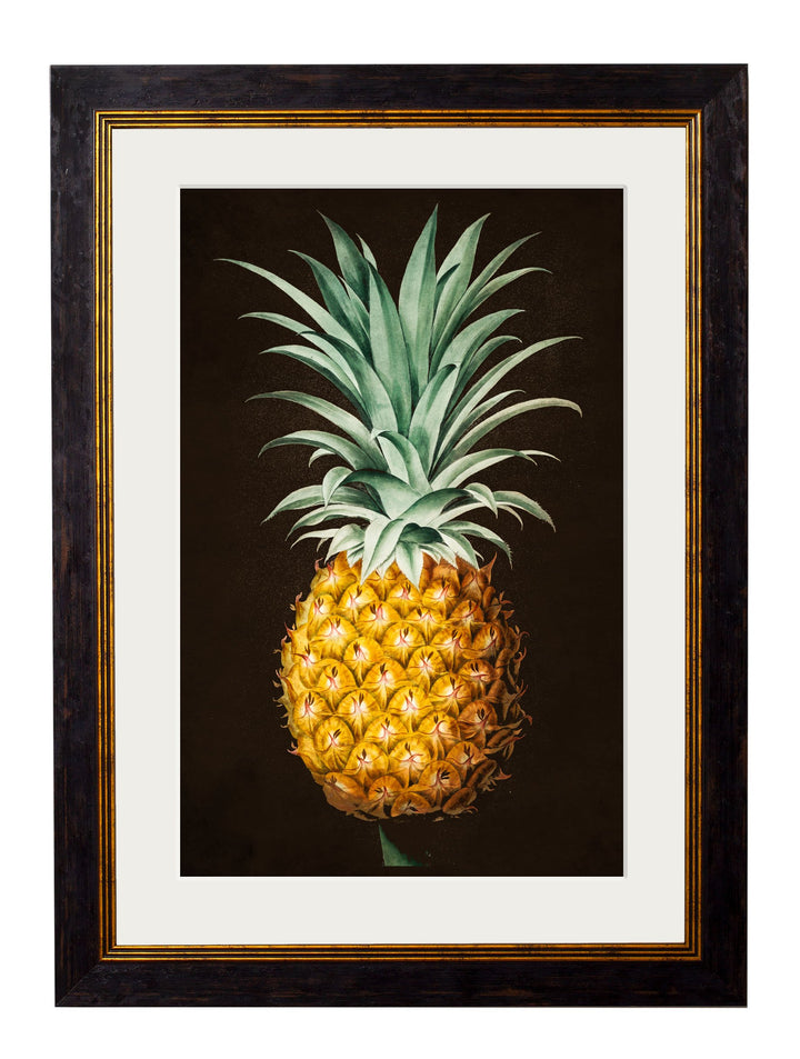 c.1812 Pineapple Study - The Weird & Wonderful