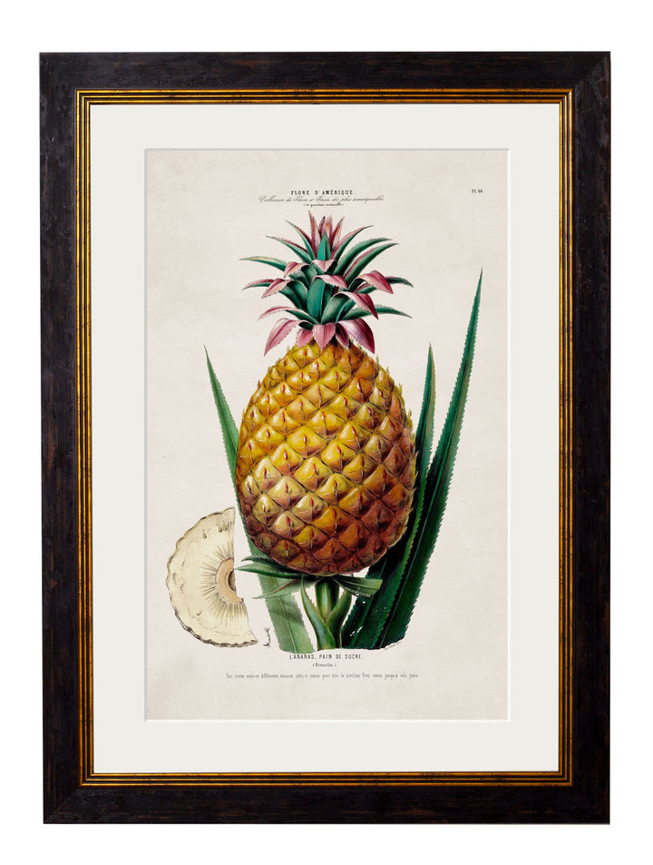 c.1843 Pineapple Plant - The Weird & Wonderful