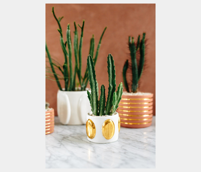 "3"" Planter in Glossy White + Gold Ovals"