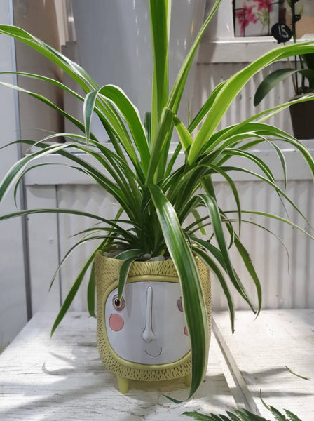 Indoor Plants designed by artist Michelle Allen
