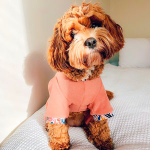 Cavoodle dog wearing the Camberwell onesie on a bed