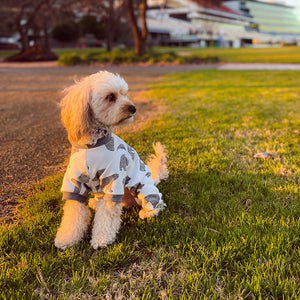 Cavoodle dog wearing the Kings Park onesie in the park