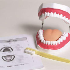 Oral Hygiene Model - MAOH01
