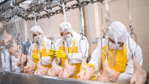 Masked Poultry workers